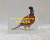 Greetings cards 5 Printed from an original watercolour PHEASANT