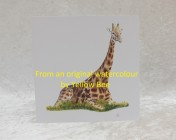 Greetings cards 5 Printed from an original watercolour GIRAFFE