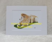 Mounted Print from original watercolour LION