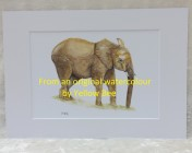 Mounted Print from original watercolour ELEPHANT