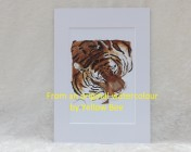 Mounted Print from original watercolour TIGER