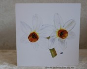Greetings cards Notelets 5 Printed from an original watercolour NARCISSI