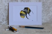 Mounted Print from original watercolour BEE