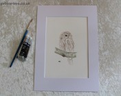 Signed Mounted original Watercolour – Ural Owl
