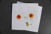 Greetings cards Notelets 5 Printed from an original watercolour DAFFODILS